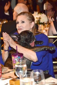 Carrie Fisher Emotional Support Animal Gary the Dog